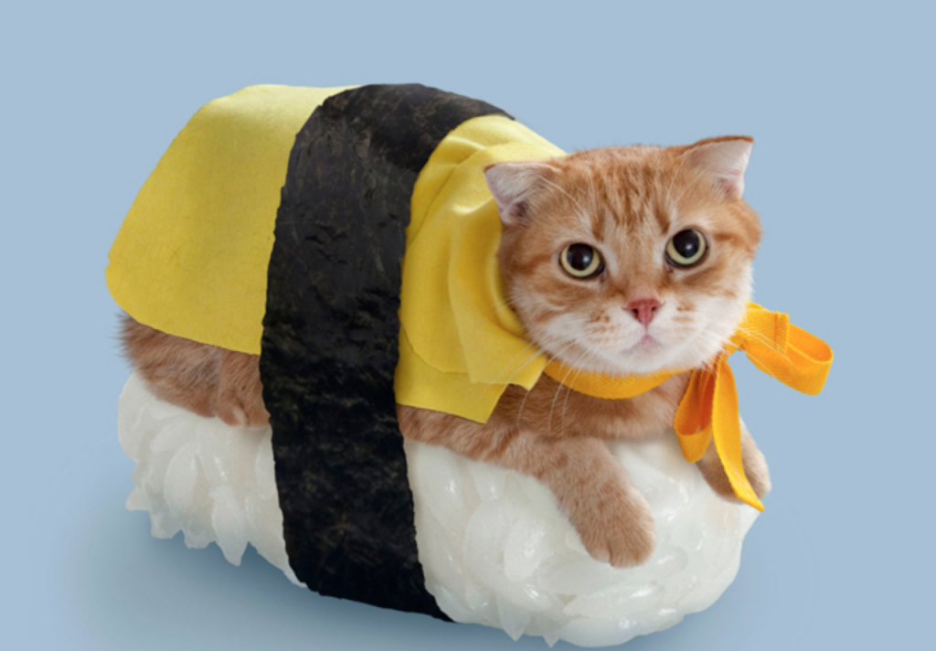 35 Cute Cats in Costumes - MyThirtySpot