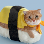 35 Cute Cats in Costumes