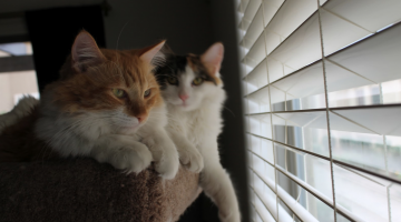 Helping Shelter Cats with Million Meow Mission from Fresh Step
