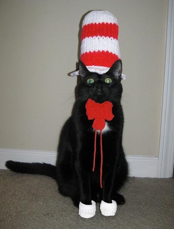 & 35 Cute Cats in Costumes - MyThirtySpot